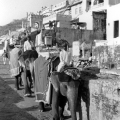 6-elephants-with-mahouts-jaipur